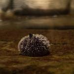 Unterwasser-Impressionen.